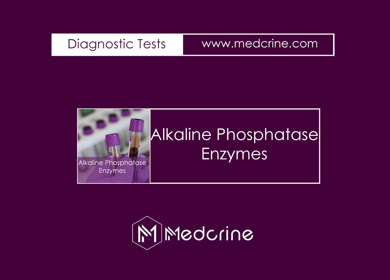 Alkaline Phosphatase Enzyme (ALP) Enzymes