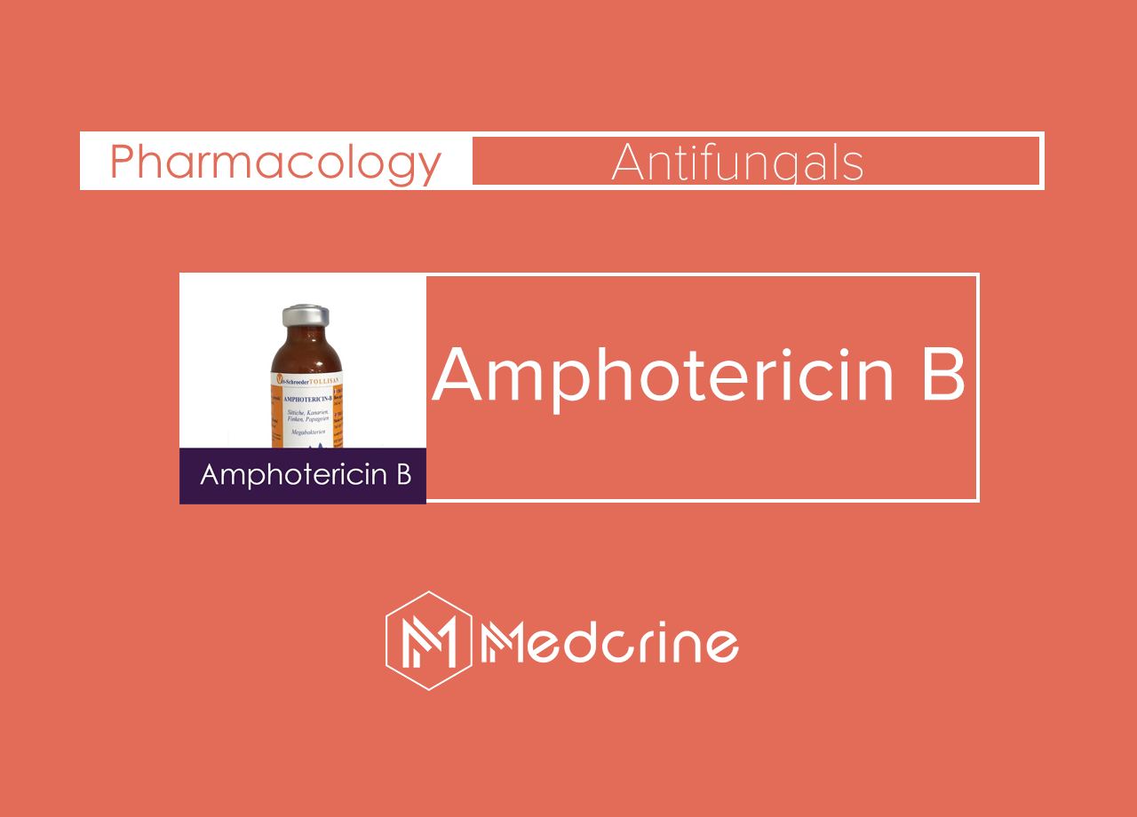 Amphotericin B Injection : Uses, Indications, Side Effects