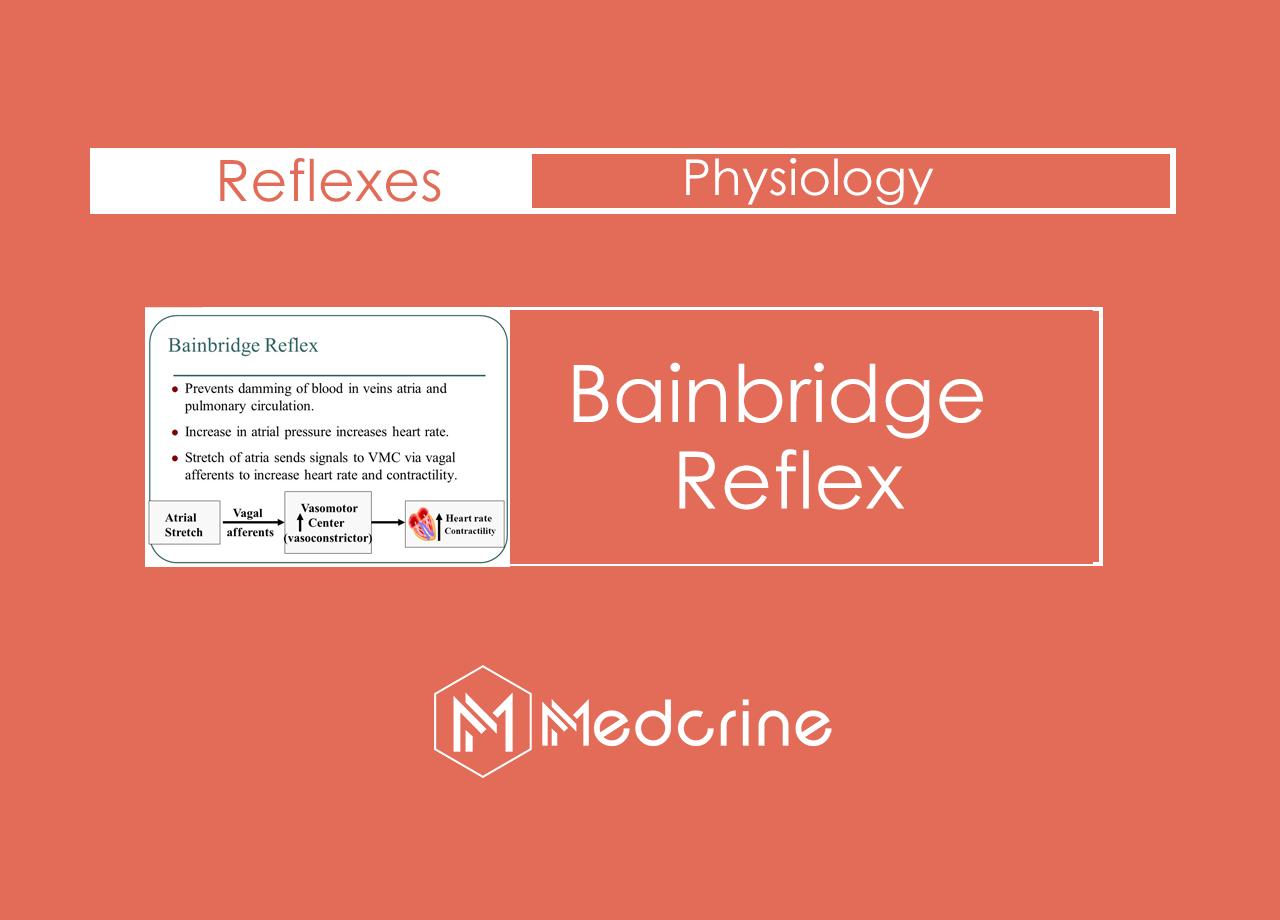 What is a Bainbidge reflex?