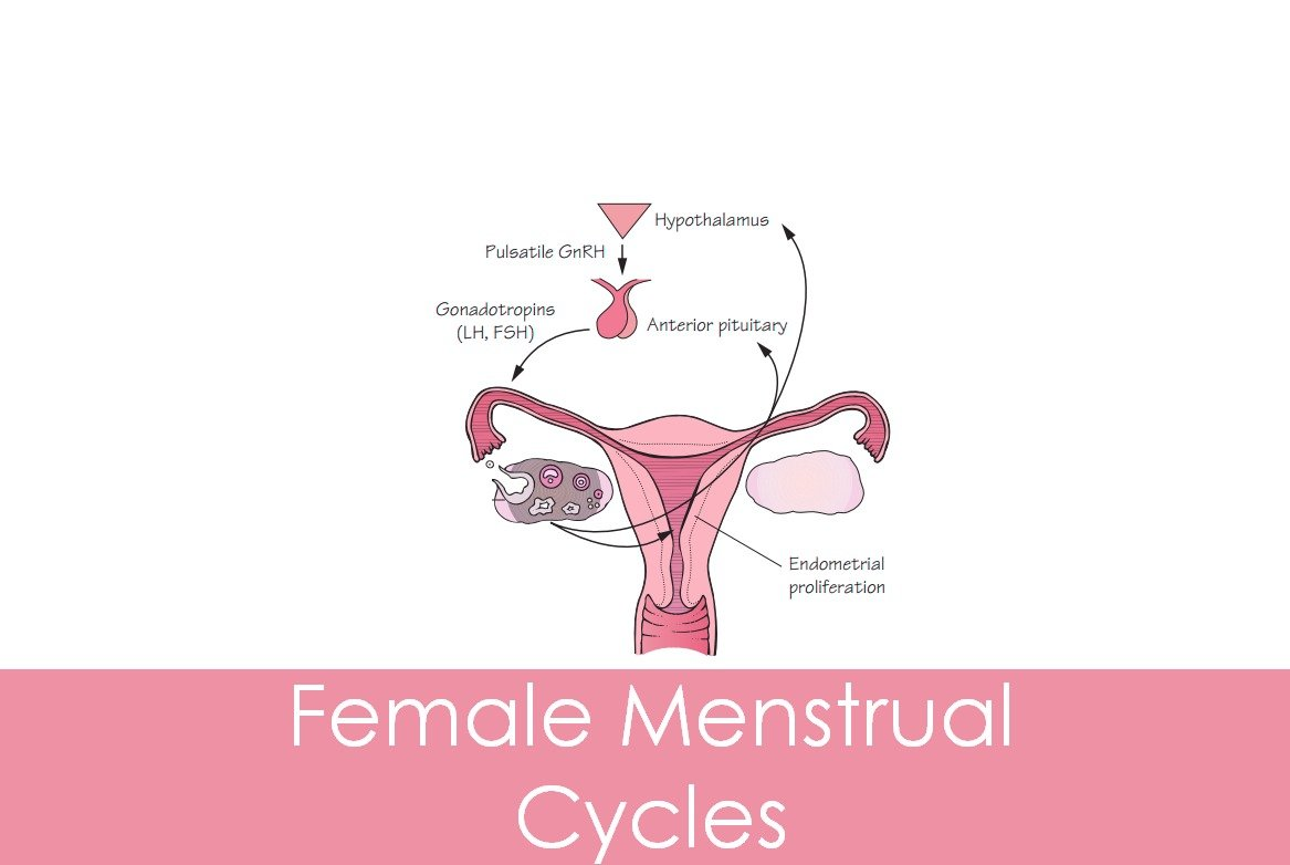 Female Reproductive Cycles and Hormones