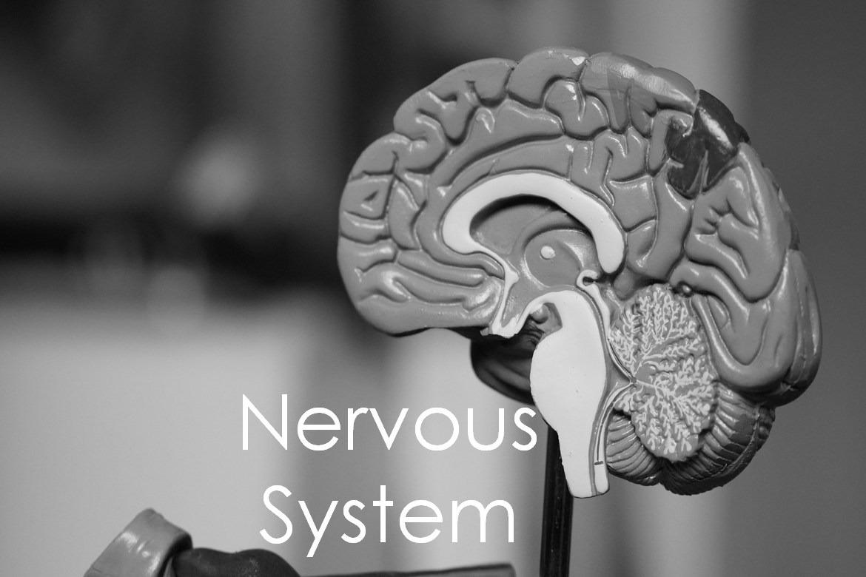 Nervous System Physiology