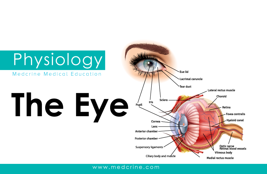 Anatomy of The Eye and Vision