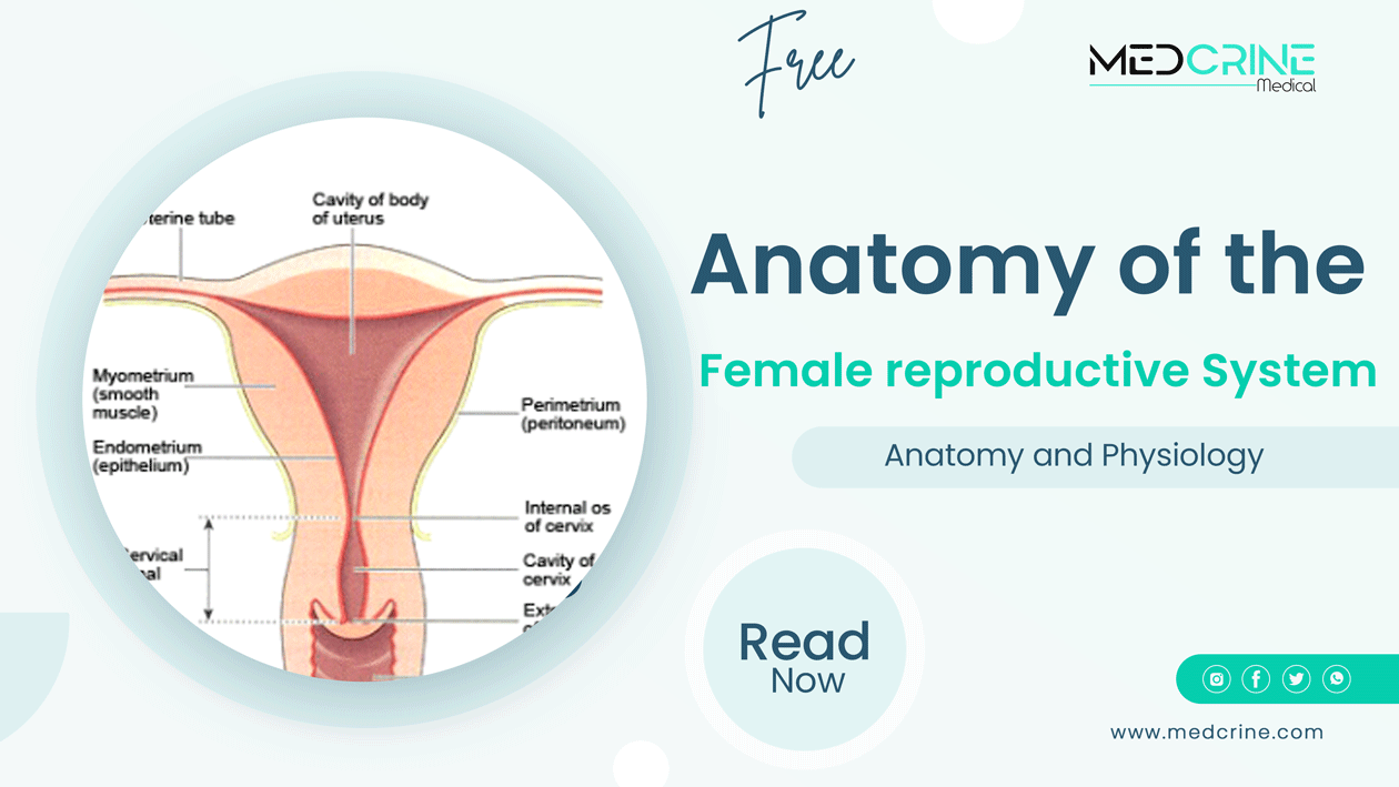 The Female Reproductive System Anatomy